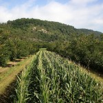 Sumber https://www.euractiv.com/section/development-policy/interview/tony-simons-agroforestry-is-a-win-win-for-developing-nations/
